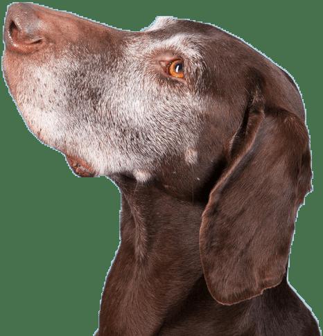 Canton dog euthanasia