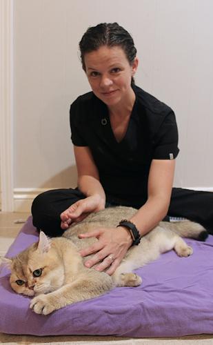 Pet Acupuncture in Canton MI